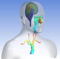 Virtual Physiological Human